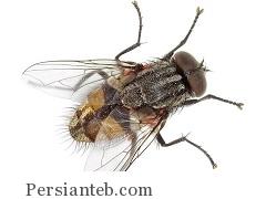 magas Persianteb