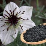 آنتی بیوتیک های گیاهی را بشناسید!
