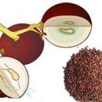 عصاره انگور باعث جلوگیری از سرطان پروستات می شود