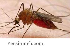 مالاریا کشنده ترین بیماری در هند!