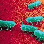 مقاله ای جامع در خصوص باکتری سالمونلا و راه درمان آن