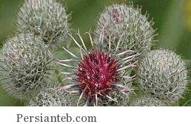 گیاهانی که برای تصفیه خون مناسب است!