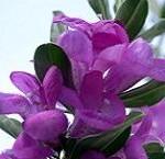 از فواید گیاه مریم گلی بیشتر بدانید!