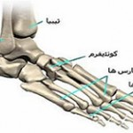 آناتومی پا و ۵ استخوان پا که باید بشناسید!