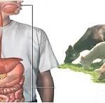 مقاله ای کامل در مورد بیماری تب مالت / علت، علائم و درمان