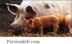 بیماری آنفولانزای خوکی