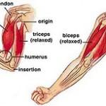 ۶ حرکت برای تقویت عضلات بازو