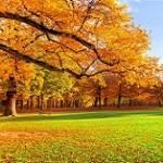 چند توصیه درباره فصل پاییز از زبان طب سنتی