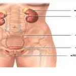 بررسی عفونتهای مختلف ناحیه تناسلی زنان