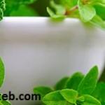 ۵ سبزی مفید برای پاکسازی ریه و بهبود تنفس