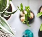 ۸ گیاهی که برای سلامت شما بسیار مهم هستند
