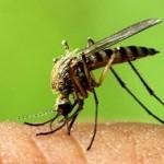 در مورد ویروس زیکا چیزی می دانید؟