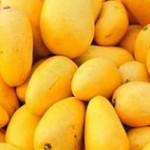 آشنایی با خطرات میوه انبه