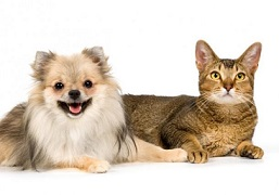 حیوانات در منزل