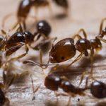 راه های مقابله با حشرات موذی – قسمت اول
