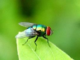 مقابله با حشرات موذی