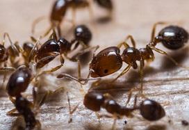حشرات موذی