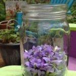 فواید گیاه بنفشه از نگاه طب سنتی