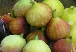 میوه انجیر