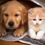 در مورد عقیم کردن گربه و سگ بیشتر بدانید
