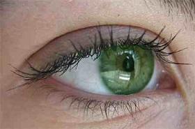 سلامت چشم ها