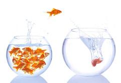 خطرات ماهی قرمز
