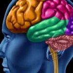 باورهای اشتباه در مورد تقویت مغز