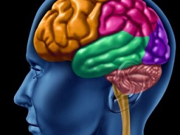در مورد تقویت مغز
