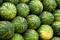 هندوانه خوردن