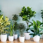 ۹ گیاه آپارتمانی مناسب فصل گرما