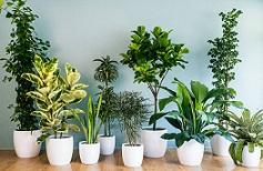 9 گیاه آپارتمانی