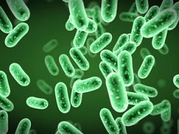 واکنش باکتری های روده