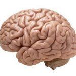 محافظت از مغز و نخاع + روش های محافظت از مغز