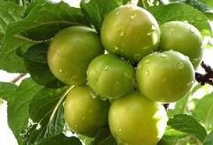 در مورد خواص بی نظیر گوجه سبز بدانید