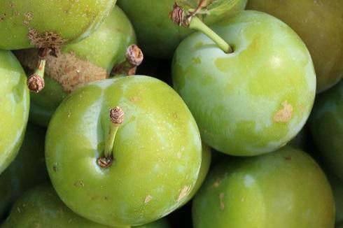 خواص بی نظیر گوجه سبز