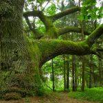 تعبیر خواب درخت آبنوس ، دیدن درخت در خواب