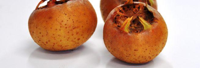 میوه ازگیل + خواص درمانی ازگیل